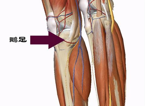 膝关节疼痛,这几个穴位在家按,不去医院也能治!*  正确膝盖拔火罐位置图