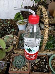 自制养花滴水器