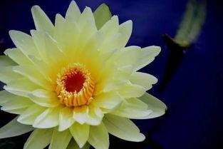 各种名贵莲花,真是太美了