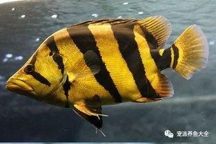 鱼界(箭蝶鱼是什么动物?)