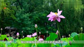 fleur谚语