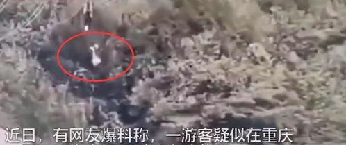 最新重庆一女子高空索道坠落身亡,景区项目已停运