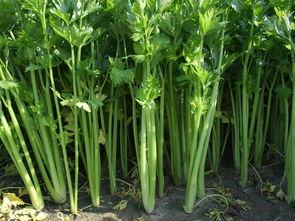 没有冰箱也能保鲜蔬菜,番茄能存20天,一个塑料袋就让香蕉不烂