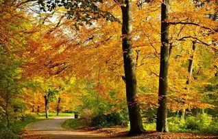 形容秋天早晨美好的古诗词