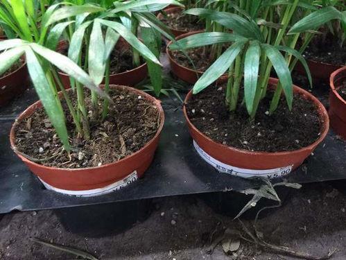 养花的旧土能直接用吗