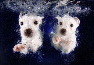 美国摄影师抓拍小狗首次潜水萌照 高清组图