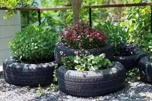 车胎怎么养花