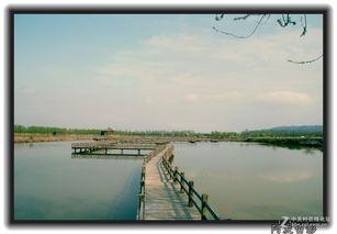 玉环湿地公园可以钓鱼吗
