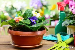 绿树叶对养花的作用