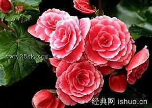 描写红色月季花的词语