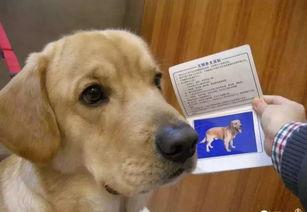 投诉:市民反映养犬不文明行为养狗的市民时常带着犬只在花果园遛弯、玩耍。