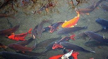 做梦梦到鱼在手上治病