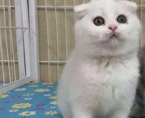 两个月的蓝猫感冒了怎么办
