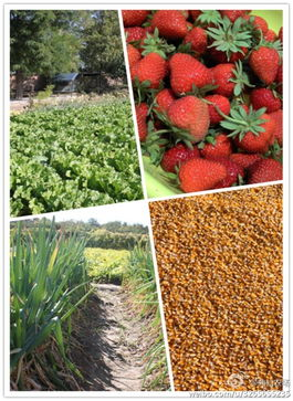 怎样在QQ空间农场中种植草莓