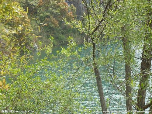 关于春天杨树的古诗