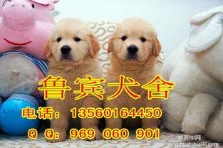 【广州哪里有卖金毛犬广州金毛什么价格呢】-广州黄页88网