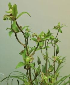 养花能水喷叶子吗
