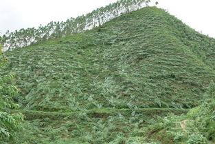 中国树种分布区可分为哪些类型