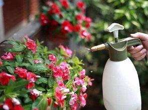 养花叶面喷水加什么比较好