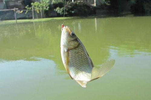 肥西附近哪里可以免费钓鱼