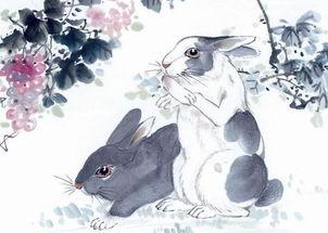 属兔的在2002运程