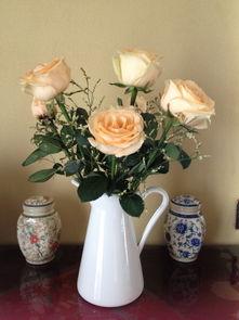 淡雅的香槟玫瑰