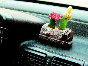 能在车里养花吗