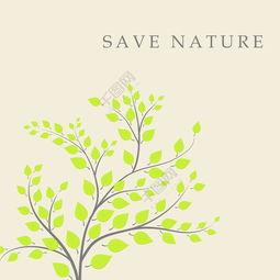 关于叶的自然知识