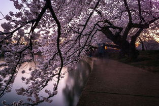 Pics Of Japan s