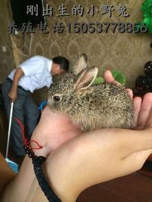 几种防治野兔病的中草药  兔子可以吃什么中草药