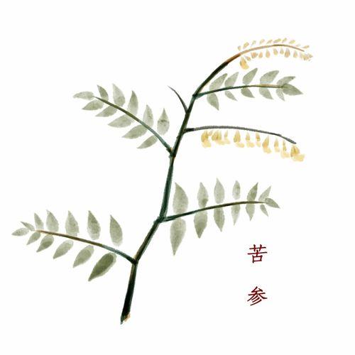 本草求真:豨莶草补益之谜  舒肝化瘀健脾祛湿的药