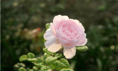 养花laoshe