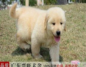 深圳哪里有狗狗收容站