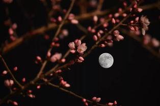 写出有关于春的诗句