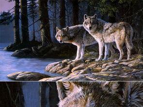狼王梦中有什么好段摘抄