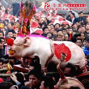 做梦梦到猪交配