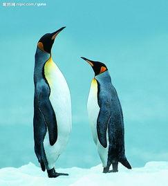 企鹅-生活习性
