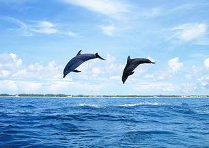 澳大利亚海豚岛7晚9日 大洋路十二门徒岩 翠儿河捉蟹 观海豚 CX