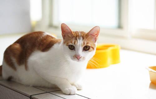 猫咪猫粮中毒的症状