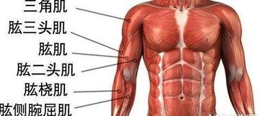 如何锻炼手臂力量(如何锻炼臂力)