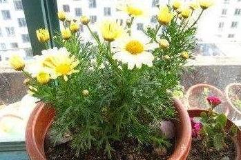 养花用的绿卉宝