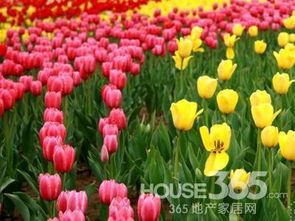 室内养花会中毒吗