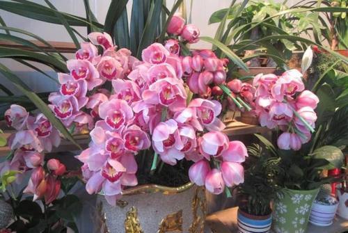 维生c能养花