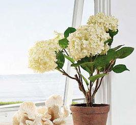 如何在室外窗台上加固设置养花