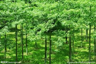 小树林图片