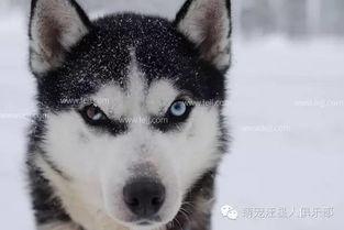 给狗狗起名字大全 狗狗洋气霸气的名字