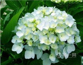 卧室放什么植物好——风水问题首先,在夫妻的卧室中,不要摆放像仙人掌、松柏以及其他的针叶或者尖角的植物。