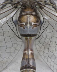 蜻蜓的翅膀发明了什么