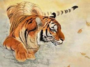 属虎人和哪个属相合财(属虎的人和什么属相做生意和财)