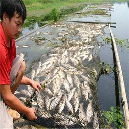 周公解梦梦见死鱼是什么意思 易奇八字解梦